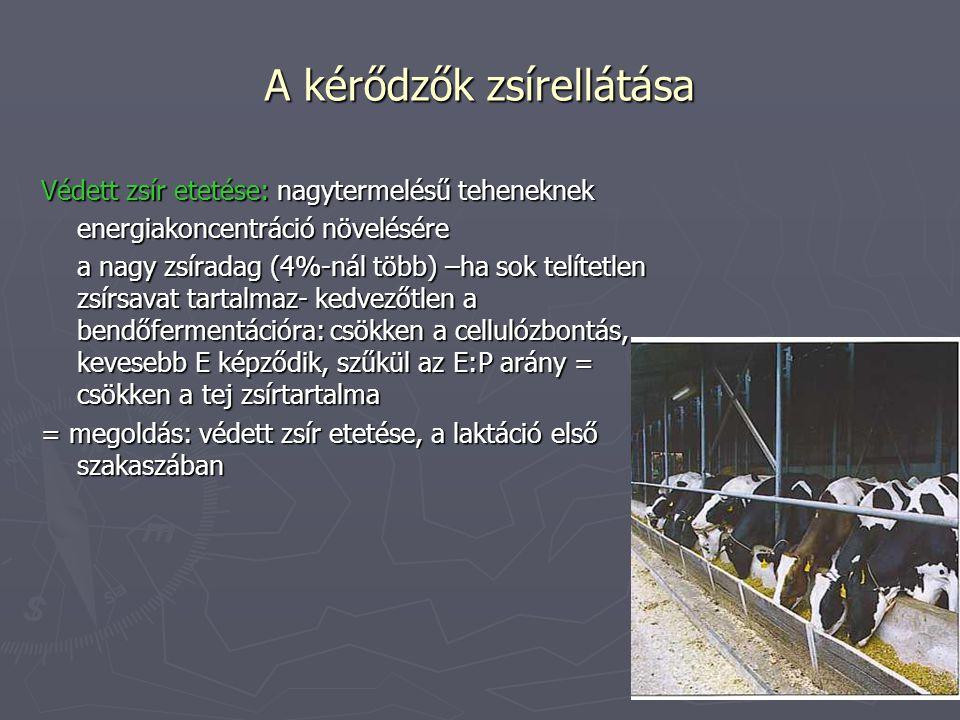 A kérődzők zsírellátása Védett zsír etetése: nagytermelésű teheneknek energiakoncentráció növelésére a nagy zsíradag (4%-nál több) –ha sok telítetlen