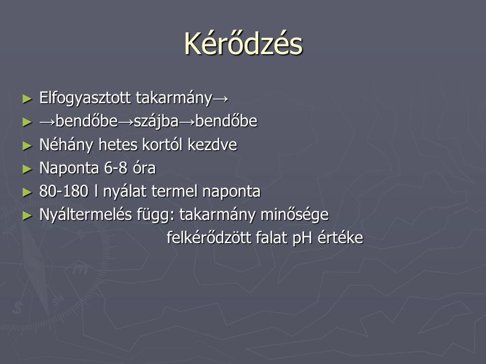 A kérődzők fehérje-emésztése ► Bendőben fel nem használt NH 3 máj karbamid: NYÁL (rumino-hepatikus körforg.) VIZELET Túl sok NH 3 : Vérbe jut =karbamid mérgezés