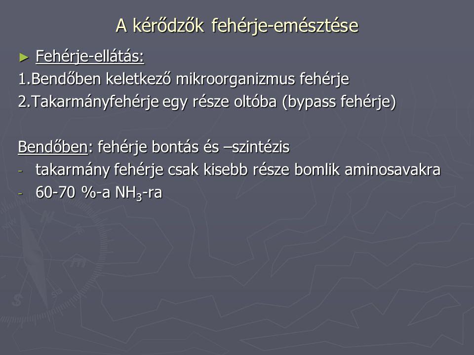 A kérődzők fehérje-emésztése ► Tak.fehérje bendő NH 3 Baktériumok testállománya Állati fehérje Baktérium fehérje + E+ E + E Protozoonok megeszik +E: energia igényes (takarmány könnyen oldódó szénhidrátjaiból ered =Mikroorganizmus fehérje mennyisége: N függő (MFN érték) energia függő (MFE érték)