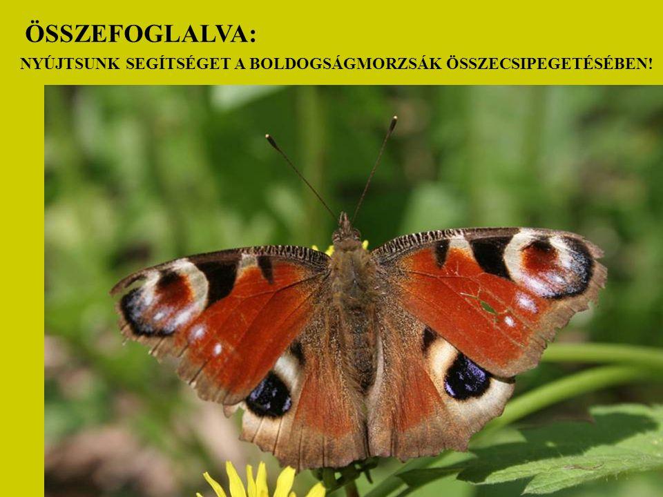 VIATICUM tájbejárás Gyula 2009. 02. 28.
