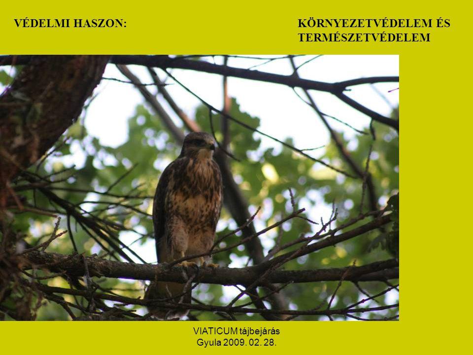 VIATICUM tájbejárás Gyula 2009. 02. 28. REKREÁCIÓS HASZON:TURISZTIKA PIHENÉS FELTÖLTŐDÉS