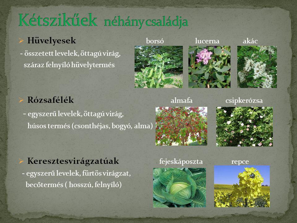  Hüvelyesek borsó lucerna akác - összetett levelek, öttagú virág, száraz felnyíló hüvelytermés  Rózsafélék almafa csipkerózsa - egyszerű levelek, öt