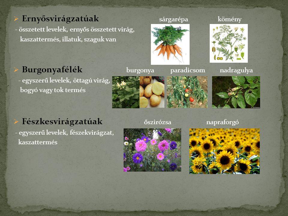  Ernyősvirágzatúak sárgarépa kömény - összetett levelek, ernyős összetett virág, kaszattermés, illatuk, szaguk van  Burgonyafélék burgonya paradicso
