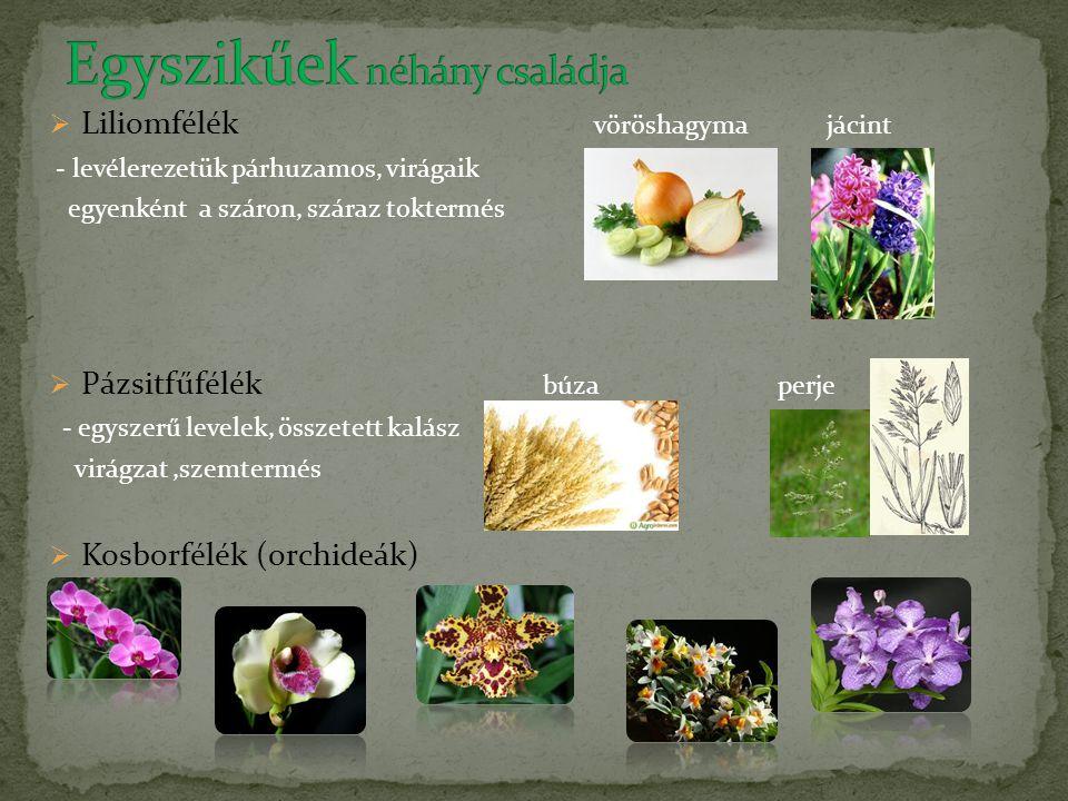  Liliomfélék vöröshagyma jácint - levélerezetük párhuzamos, virágaik egyenként a száron, száraz toktermés  Pázsitfűfélék búza perje - egyszerű level
