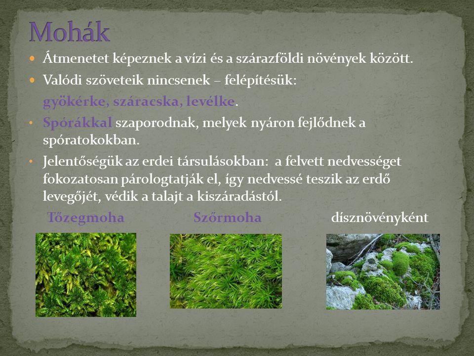Átmenetet képeznek a vízi és a szárazföldi növények között. Valódi szöveteik nincsenek – felépítésük: gyökérke, száracska, levélke. Spórákkal szaporod