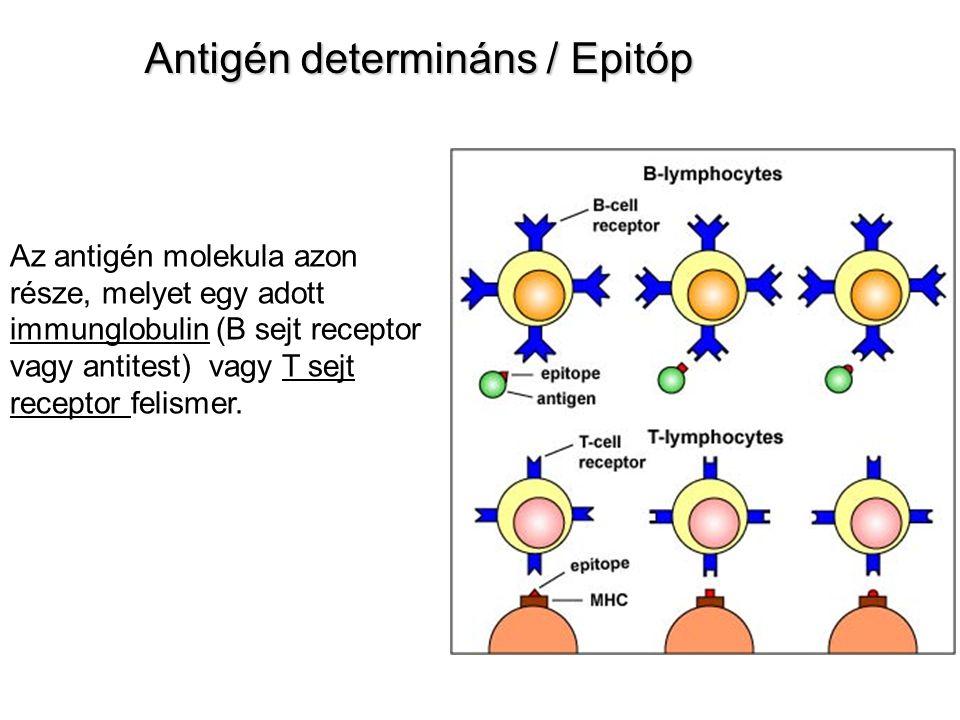 Az immunogenitást befolyásoló tényezők I.