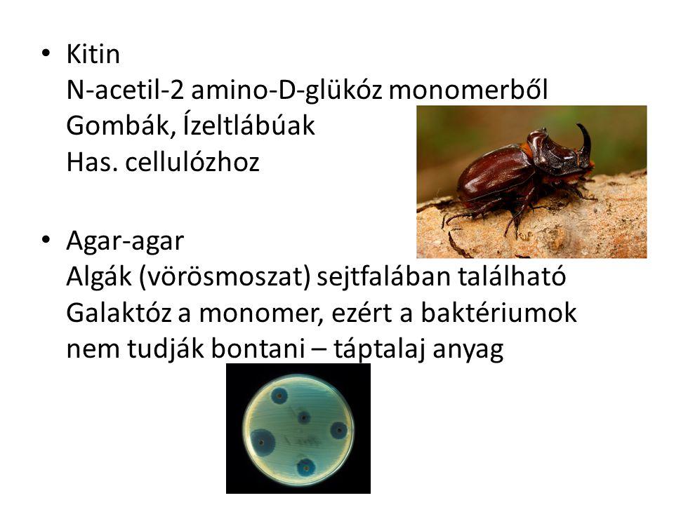 Kitin N-acetil-2 amino-D-glükóz monomerből Gombák, Ízeltlábúak Has. cellulózhoz Agar-agar Algák (vörösmoszat) sejtfalában található Galaktóz a monomer
