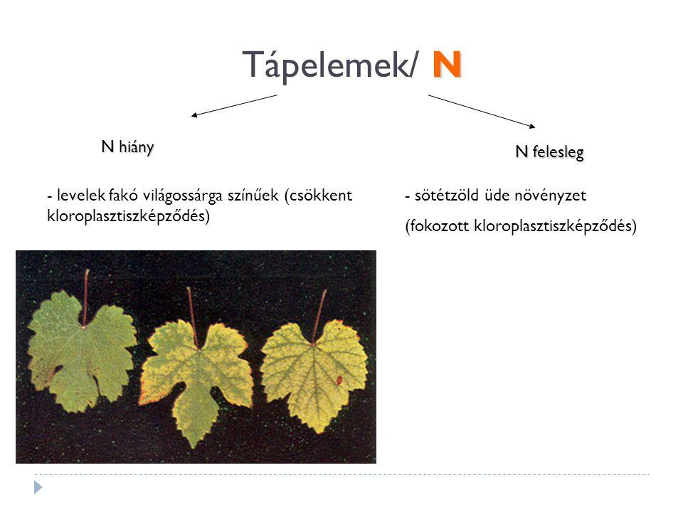 N Tápelemek/ N N hiány N felesleg - levelek fakó világossárga színűek (csökkent kloroplasztiszképződés) - sötétzöld üde növényzet (fokozott kloroplasztiszképződés)