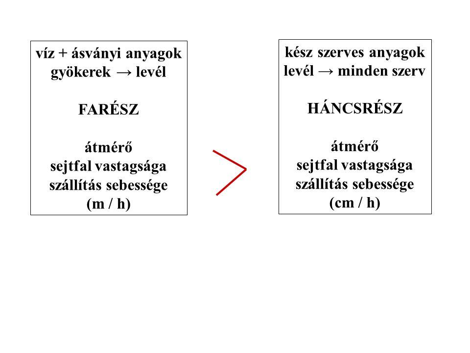 víz + ásványi anyagok gyökerek → levél FARÉSZ átmérő sejtfal vastagsága szállítás sebessége (m / h) kész szerves anyagok levél → minden szerv HÁNCSRÉS
