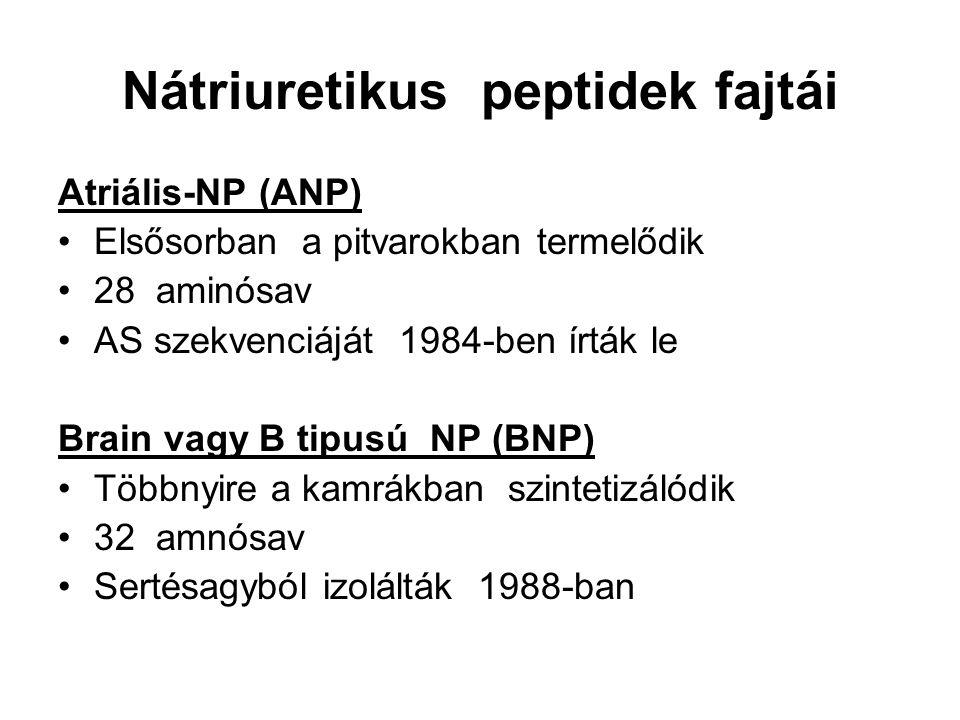 Nátriuretikus peptidek fajtái Atriális-NP (ANP) Elsősorban a pitvarokban termelődik 28 aminósav AS szekvenciáját 1984-ben írták le Brain vagy B tipusú NP (BNP) Többnyire a kamrákban szintetizálódik 32 amnósav Sertésagyból izolálták 1988-ban