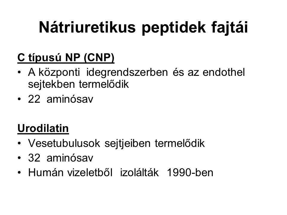 Nátriuretikus peptidek fajtái C típusú NP (CNP) A központi idegrendszerben és az endothel sejtekben termelődik 22 aminósav Urodilatin Vesetubulusok sejtjeiben termelődik 32 aminósav Humán vizeletből izolálták 1990-ben