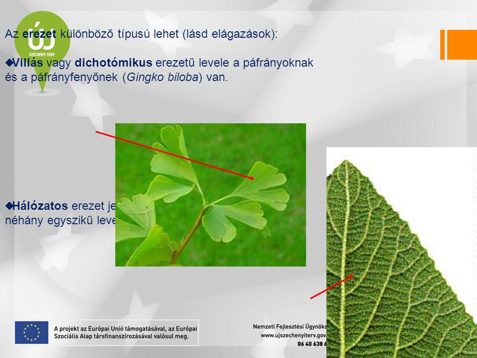 Az erezet különböző típusú lehet (lásd elágazások):  Villás vagy dichotómikus erezetű levele a páfrányoknak és a páfrányfenyőnek (Gingko biloba) van.