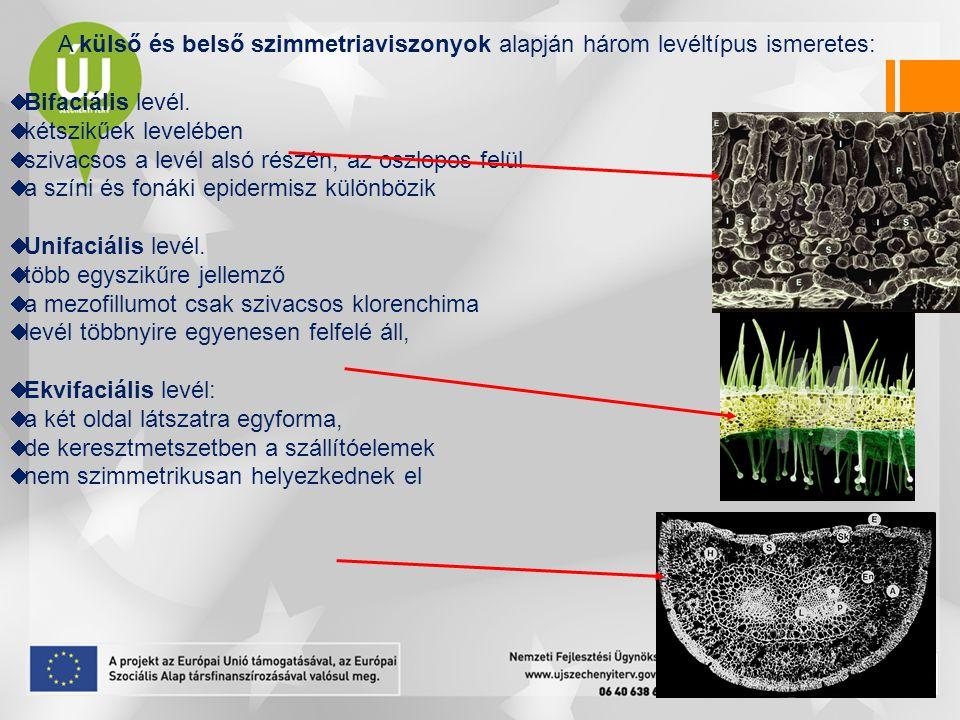 A tűlevelek szerkezete ekvifaciális levél egy vagy két nyaláb transzfúziós szövet endodermisz karos klorenchima kollenchima sztómái süllyesztettek fiziológiai szárazsághoz (így a fagyhoz) való alkalmazkodás