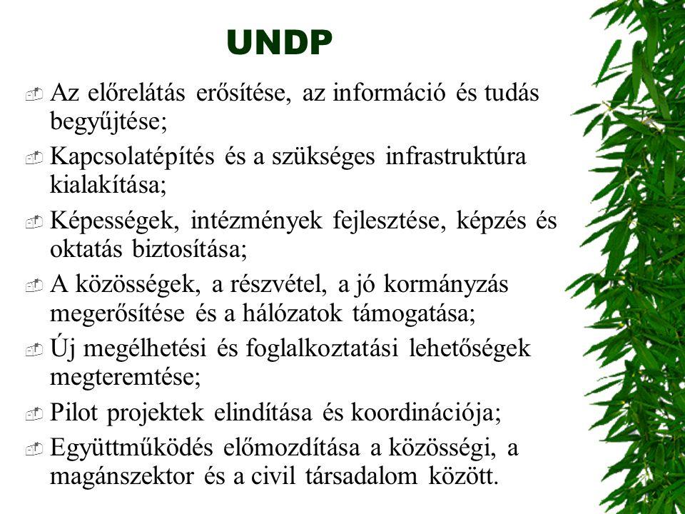 UNDP  Az előrelátás erősítése, az információ és tudás begyűjtése;  Kapcsolatépítés és a szükséges infrastruktúra kialakítása;  Képességek, intézmén