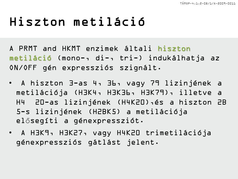 TÁMOP-4.1.2-08/1/A-2009-0011 Hiszton metiláció hiszton metiláció A PRMT and HKMT enzimek általi hiszton metiláció (mono-, di-, tri-) indukálhatja az ON/OFF gén expressziós szignált.