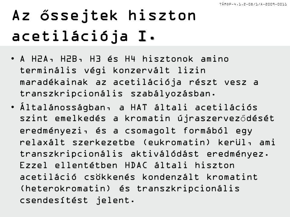 TÁMOP-4.1.2-08/1/A-2009-0011 I. Az őssejtek hiszton acetilációja I. A H2A, H2B, H3 és H4 hisztonok amino terminális végi konzervált lizin maradékainak