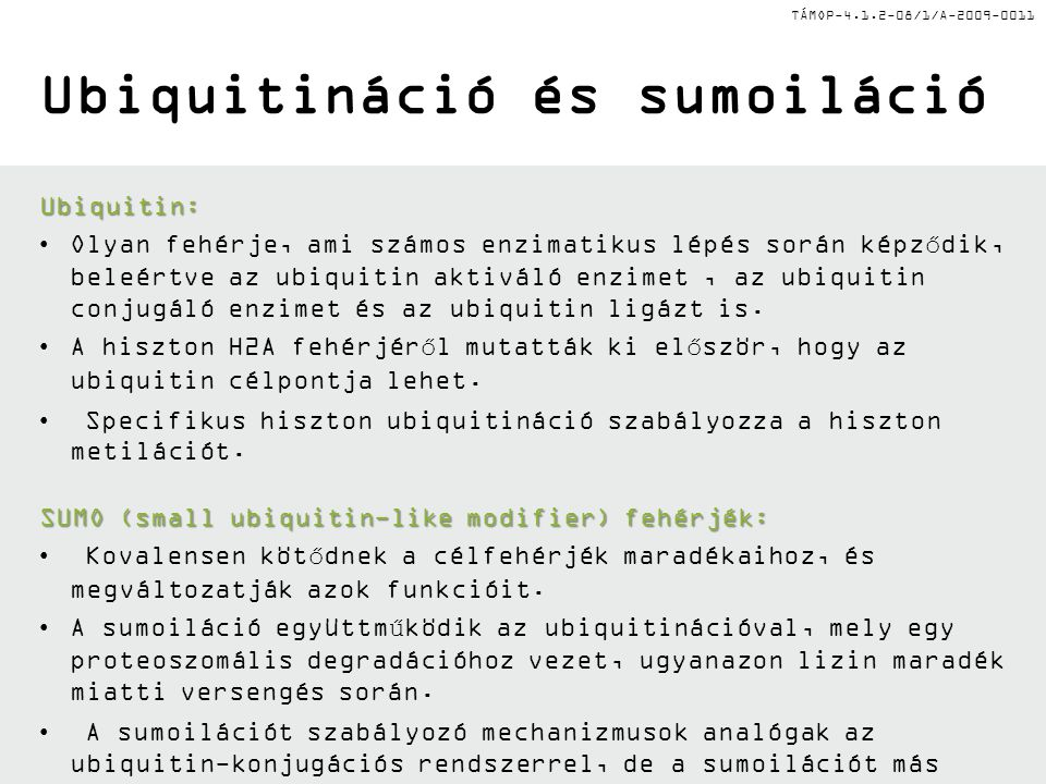 TÁMOP-4.1.2-08/1/A-2009-0011 Ubiquitináció és sumoiláció Ubiquitin: Olyan fehérje, ami számos enzimatikus lépés során képződik, beleértve az ubiquitin aktiváló enzimet, az ubiquitin conjugáló enzimet és az ubiquitin ligázt is.