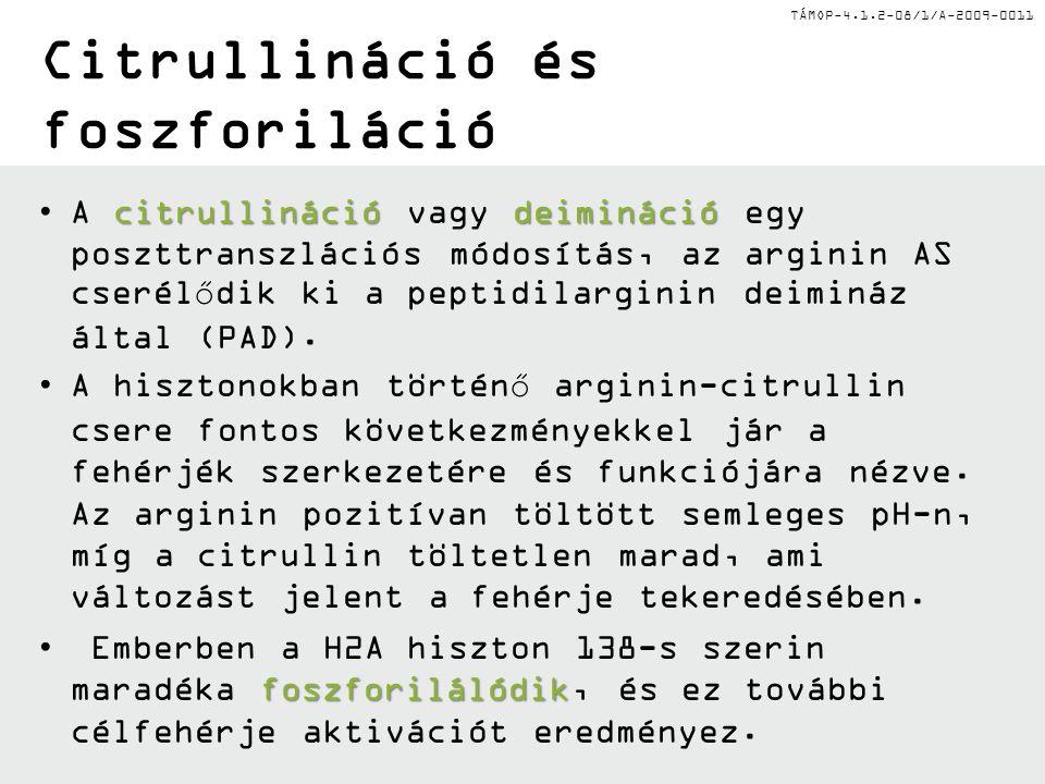 TÁMOP-4.1.2-08/1/A-2009-0011 Citrullináció és foszforiláció citrullináció deiminációA citrullináció vagy deimináció egy poszttranszlációs módosítás, az arginin AS cserélődik ki a peptidilarginin deimináz által (PAD).