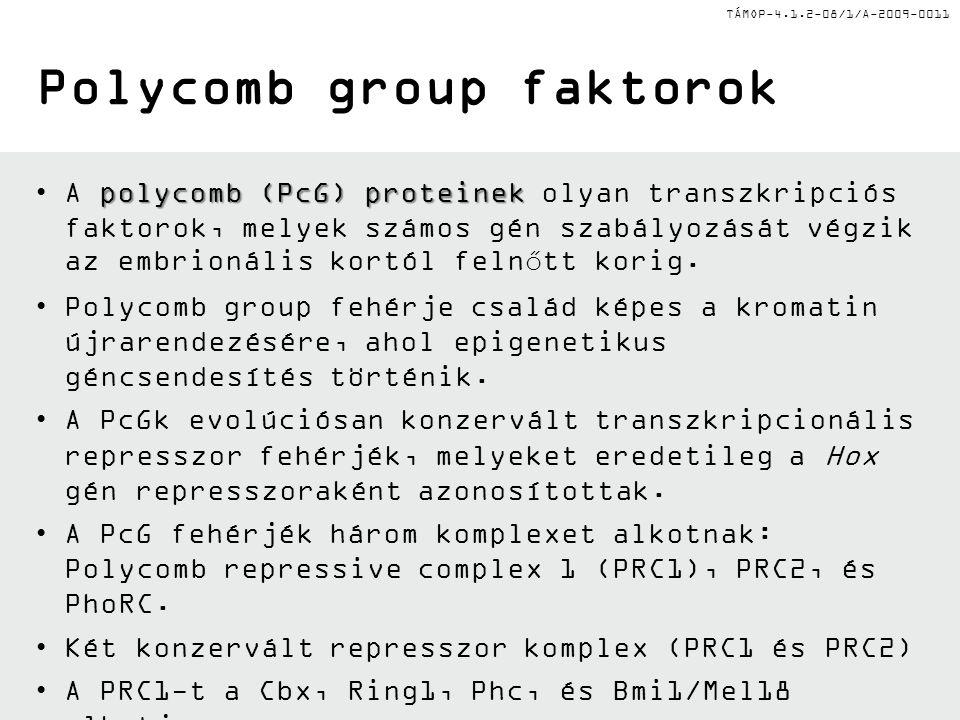 TÁMOP-4.1.2-08/1/A-2009-0011 Polycomb group faktorok polycomb (PcG) proteinekA polycomb (PcG) proteinek olyan transzkripciós faktorok, melyek számos gén szabályozását végzik az embrionális kortól felnőtt korig.