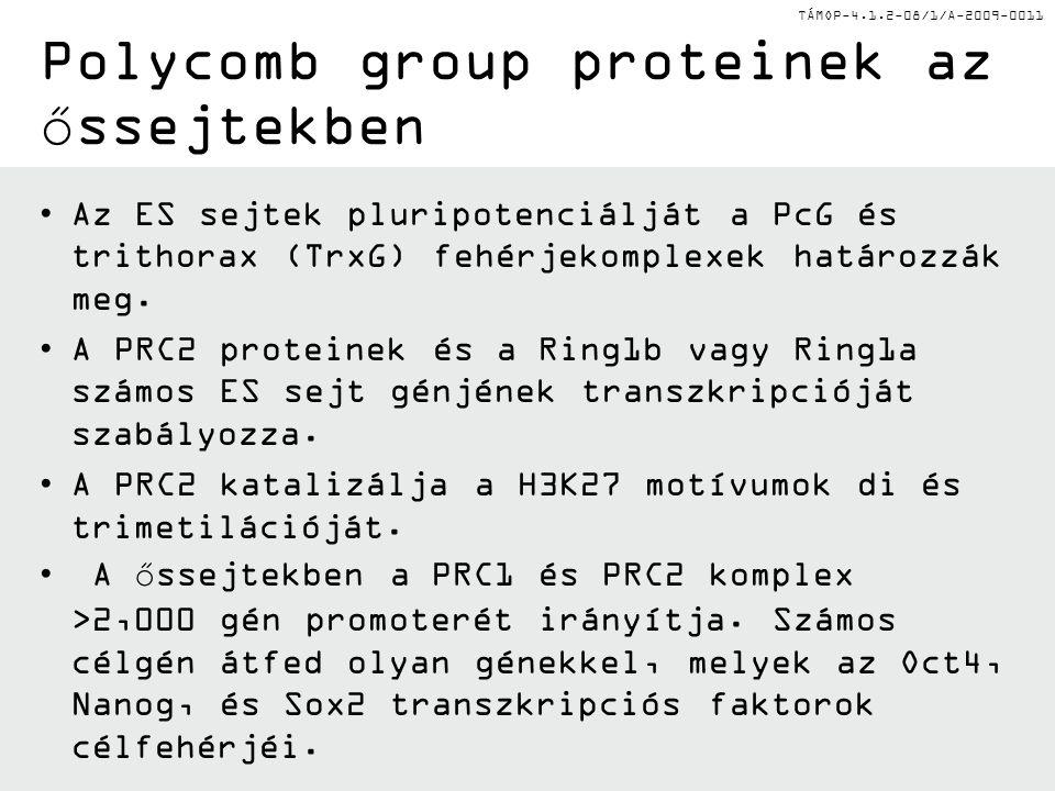 TÁMOP-4.1.2-08/1/A-2009-0011 Polycomb group proteinek az őssejtekben Az ES sejtek pluripotenciálját a PcG és trithorax (TrxG) fehérjekomplexek határozzák meg.