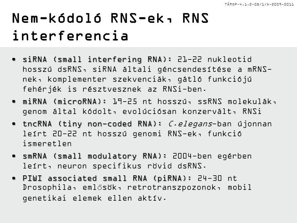 TÁMOP-4.1.2-08/1/A-2009-0011 Nem-kódoló RNS-ek, RNS interferencia siRNA (small interfering RNA):siRNA (small interfering RNA): 21-22 nukleotid hosszú dsRNS, siRNA általi géncsendesítése a mRNS- nek, komplementer szekvenciák, gátló funkciójú fehérjék is résztvesznek az RNSi-ben.