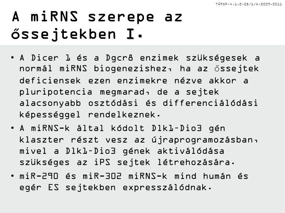 TÁMOP-4.1.2-08/1/A-2009-0011 I. A miRNS szerepe az őssejtekben I. A Dicer 1 és a Dgcr8 enzimek szükségesek a normál miRNS biogenezishez, ha az őssejte