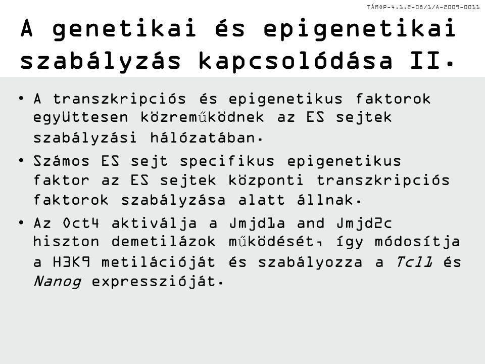 TÁMOP-4.1.2-08/1/A-2009-0011 A genetikai és epigenetikai szabályzás kapcsolódása II. A transzkripciós és epigenetikus faktorok együttesen közreműködne