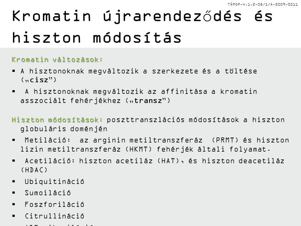 """TÁMOP-4.1.2-08/1/A-2009-0011 Kromatin újrarendeződés és hiszton módosítás Kromatin változások: A hisztonoknak megváltozik a szerkezete és a töltése (""""cisz ) A hisztonoknak megváltozik az affinitása a kromatin asszociált fehérjékhez (""""transz ) Hiszton módosítások: Hiszton módosítások: poszttranszlációs módosítások a hiszton globuláris doménjén Metiláció: az arginin metiltranszferáz (PRMT) és hiszton lizin metiltranszferáz (HKMT) fehérjék általi folyamat."""