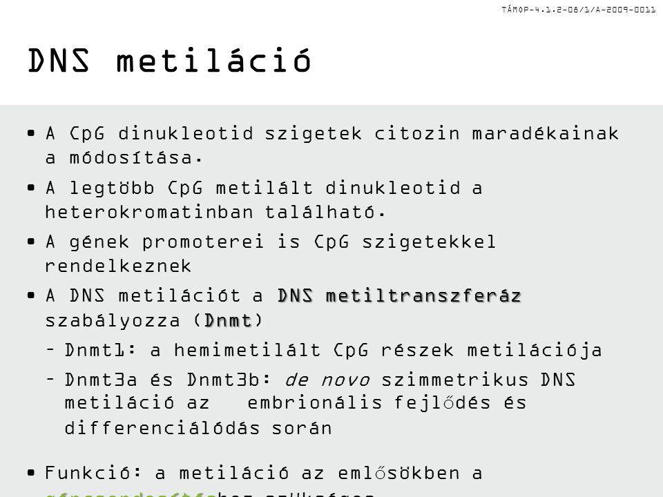 TÁMOP-4.1.2-08/1/A-2009-0011 DNS metiláció A CpG dinukleotid szigetek citozin maradékainak a módosítása. A legtöbb CpG metilált dinukleotid a heterokr