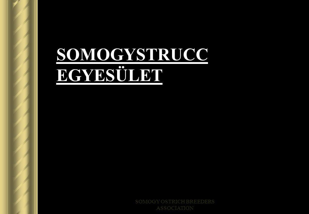 SOMOGYSTRUCC EGYESÜLET