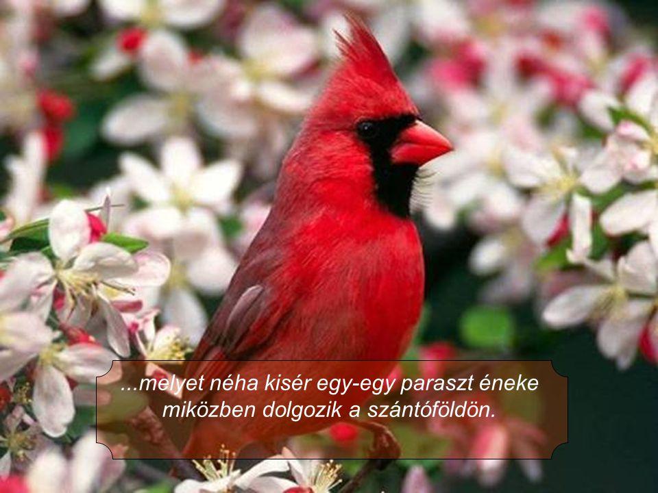 6.Azt, hogy mi CD-ről hallgatjuk a zenét, ők meg a madarak és a tücskök szimfoniáját hallgatják...