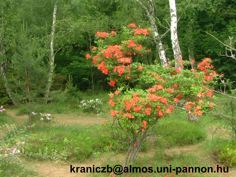 kraniczb@almos.uni-pannon.hu