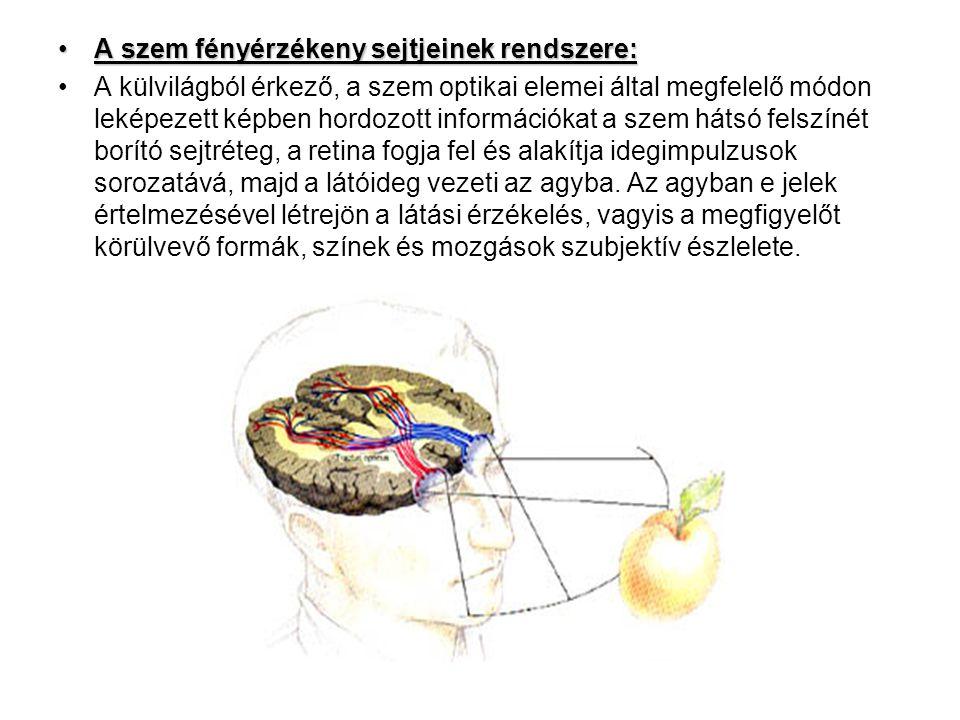 A szem fényérzékeny sejtjeinek rendszere:A szem fényérzékeny sejtjeinek rendszere: A külvilágból érkező, a szem optikai elemei által megfelelő módon leképezett képben hordozott információkat a szem hátsó felszínét borító sejtréteg, a retina fogja fel és alakítja idegimpulzusok sorozatává, majd a látóideg vezeti az agyba.