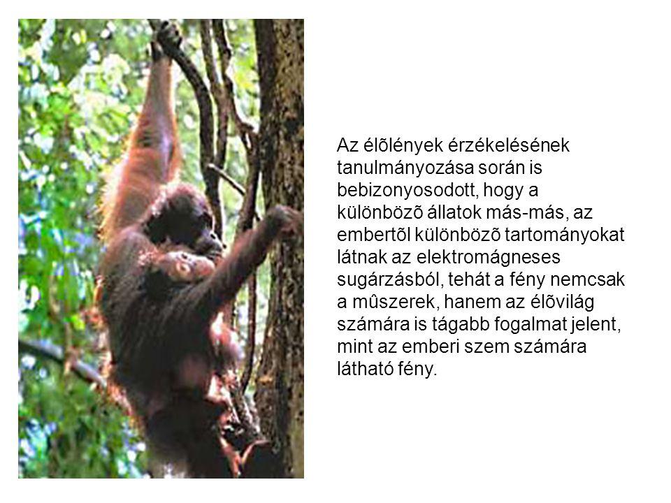 Az élõlények érzékelésének tanulmányozása során is bebizonyosodott, hogy a különbözõ állatok más-más, az embertõl különbözõ tartományokat látnak az el