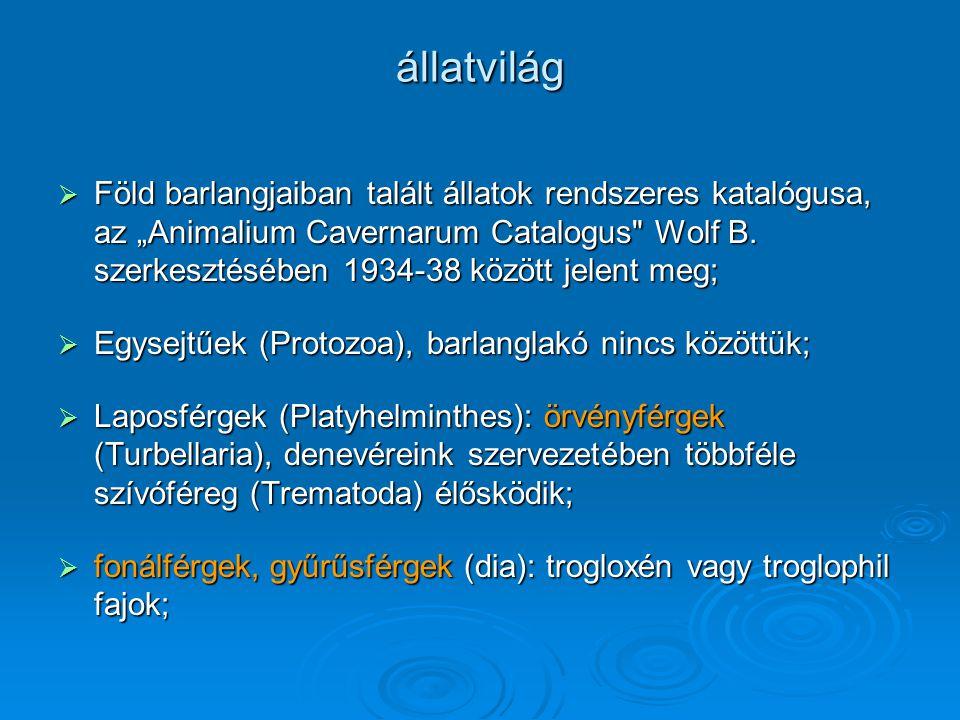 """állatvilág  Föld barlangjaiban talált állatok rendszeres katalógusa, az """"Animalium Cavernarum Catalogus"""