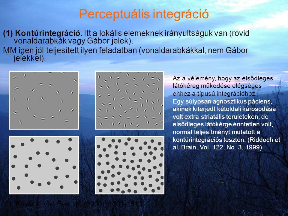 Perceptuális integráció (1) Kontúrintegráció. Itt a lokális elemeknek irányultságuk van (rövid vonaldarabkák vagy Gábor jelek). MM igen jól teljesítet