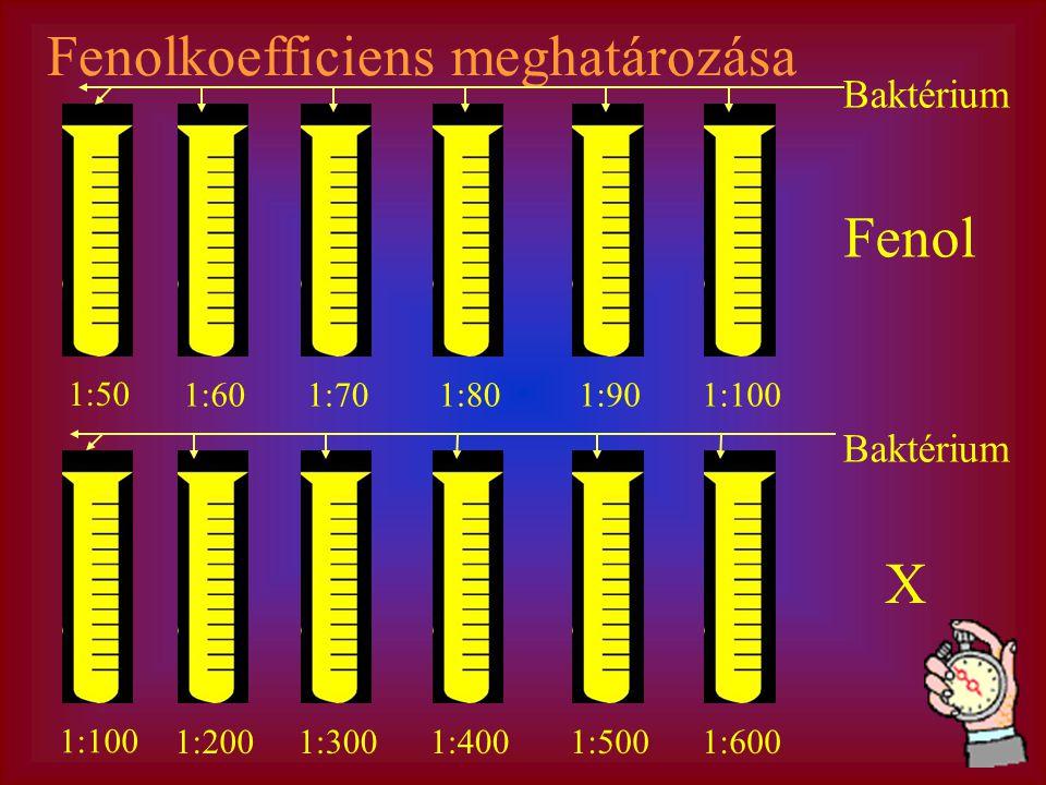 Fenolkoefficiens meghatározása Fenol 1:50 1:601:701:801:901:100 1:2001:3001:4001:5001:600 X Baktérium