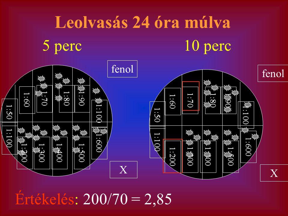fenol X 1:70 1:60 1:901:80 1:100 1:50 1:100 1:300 1:200 1:4001:500 1:600 Leolvasás 24 óra múlva fenol X 1:50 1:70 1:60 1:901:80 1:100 1:300 1:200 1:4001:500 1:600 5 perc10 perc Értékelés: 200/70 = 2,85