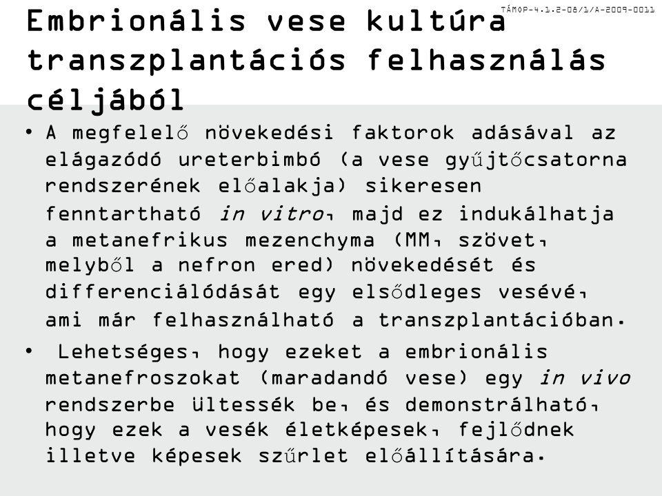 """TÁMOP-4.1.2-08/1/A-2009-0011 Vese """"szövetmérnökség"""" (Tissue Engineering) Részleges vagy teljes de novo rekonstrukciója az egész szervnek vizsgálható p"""