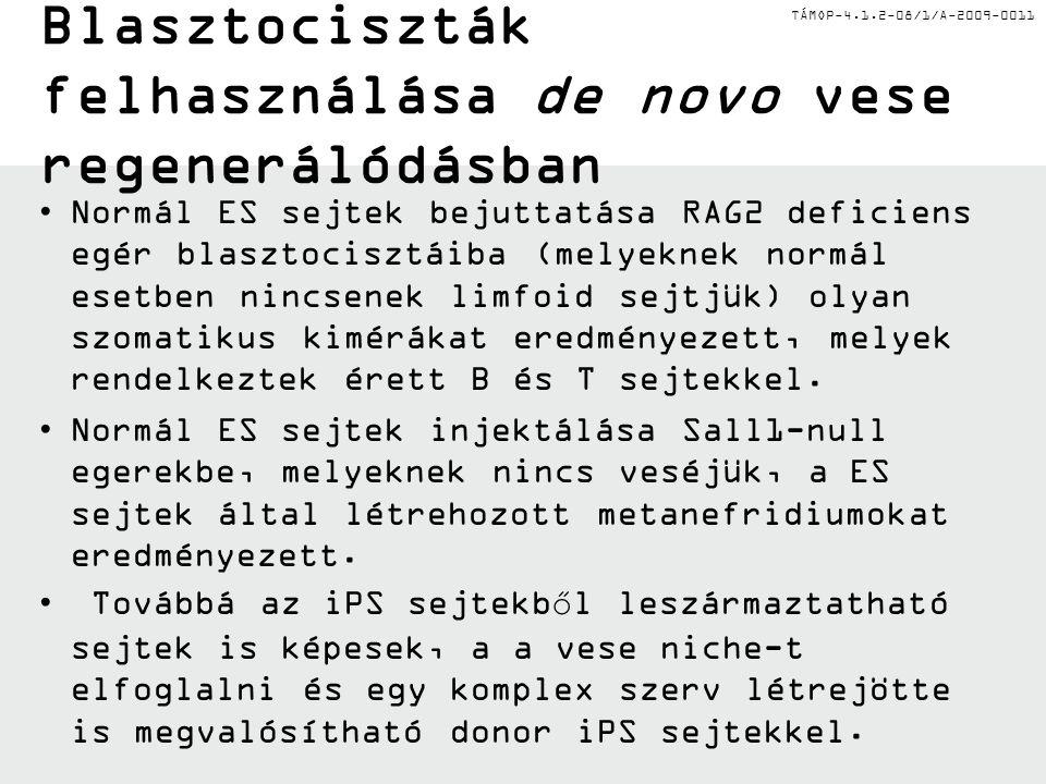 TÁMOP-4.1.2-08/1/A-2009-0011 Mesterséges alapvázak a vese transzplantációban II.