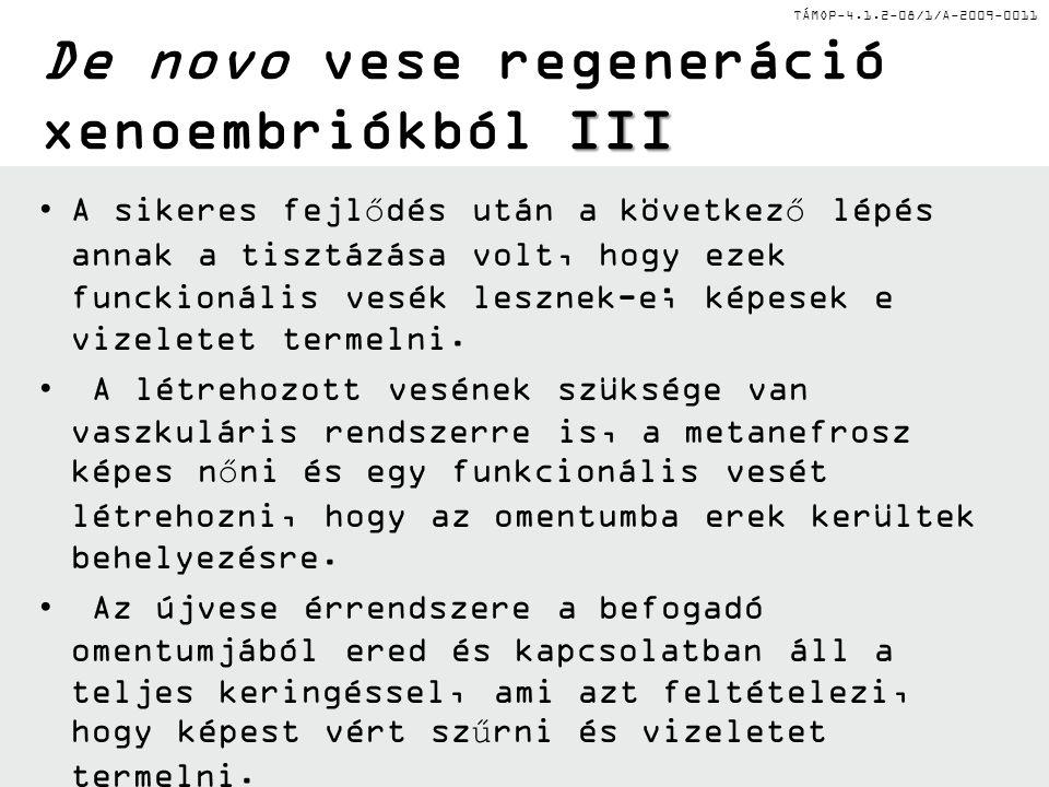 TÁMOP-4.1.2-08/1/A-2009-0011 II De novo vese regeneráció xenoembriókból II A vesebimbó kialakulása előtti patkány embriókat izoláltak az anyákból és a