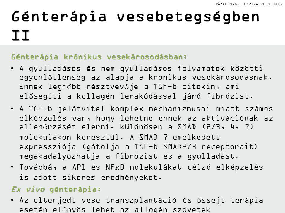 TÁMOP-4.1.2-08/1/A-2009-0011 I Génterápia a vesebetegségekben I Génterápia akut vesekárosodás esetén: Génterápia akut vesekárosodás esetén: Az AKF sor