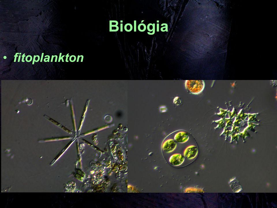 Biológia fitoplankton