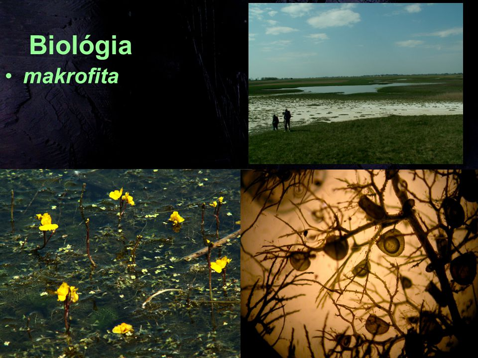 Biológia makrofita