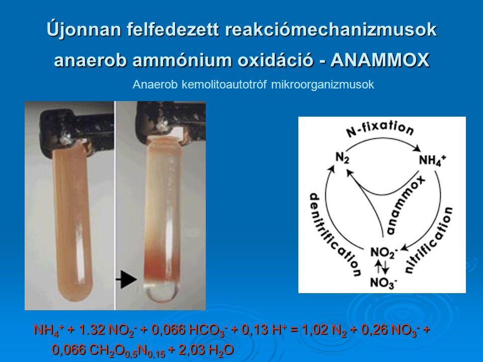 Újonnan felfedezett reakciómechanizmusok anaerob ammónium oxidáció - ANAMMOX Anaerob kemolitoautotróf mikroorganizmusok NH 4 + + 1.32 NO 2 - + 0,066 H