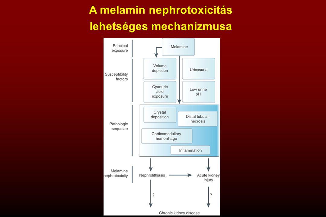 A melamin nephrotoxicitás lehetséges mechanizmusa