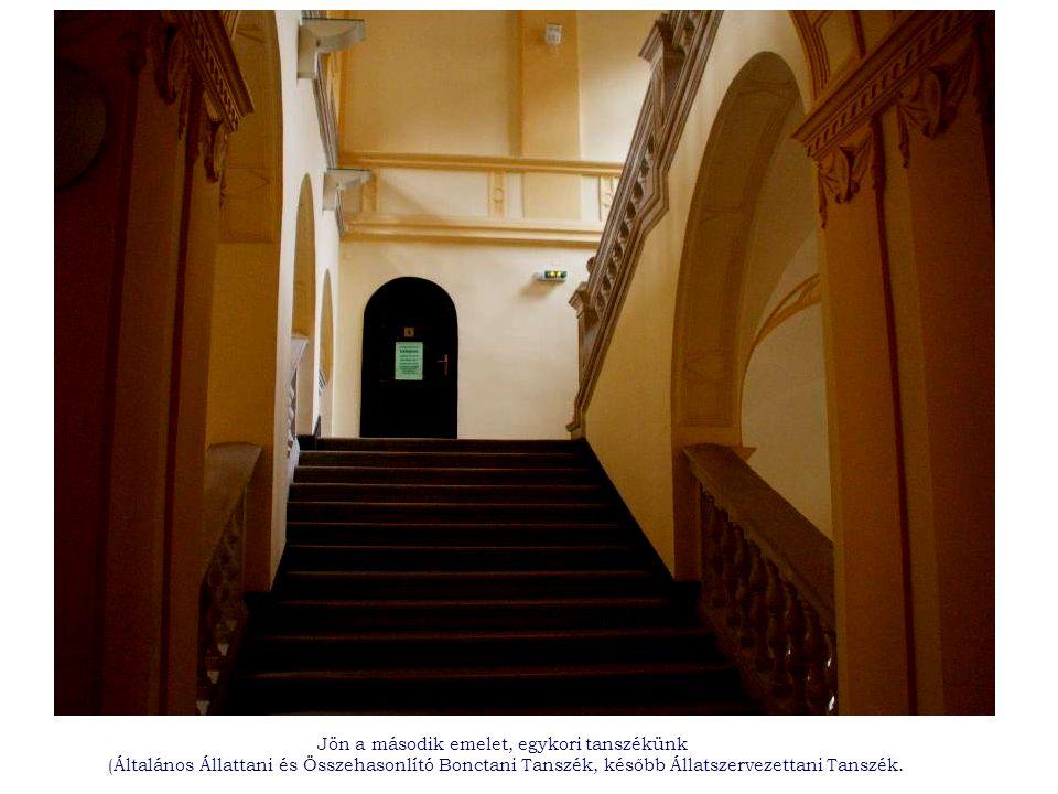 Jön a második emelet, egykori tanszékünk (Általános Állattani és Összehasonlító Bonctani Tanszék, később Állatszervezettani Tanszék.