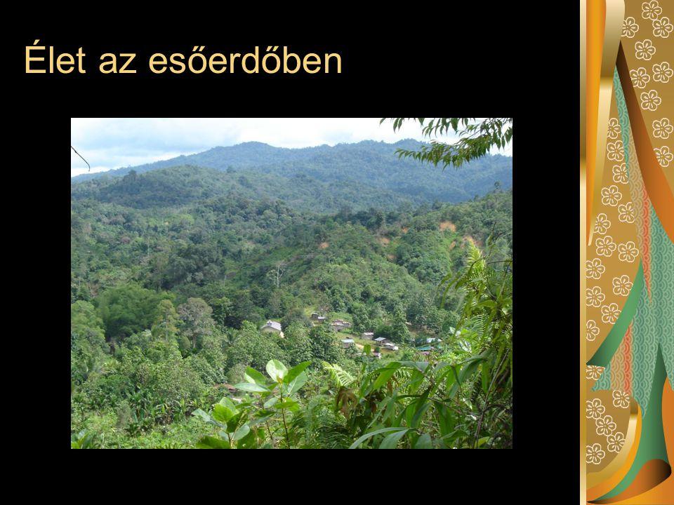 Élet az esőerdőben