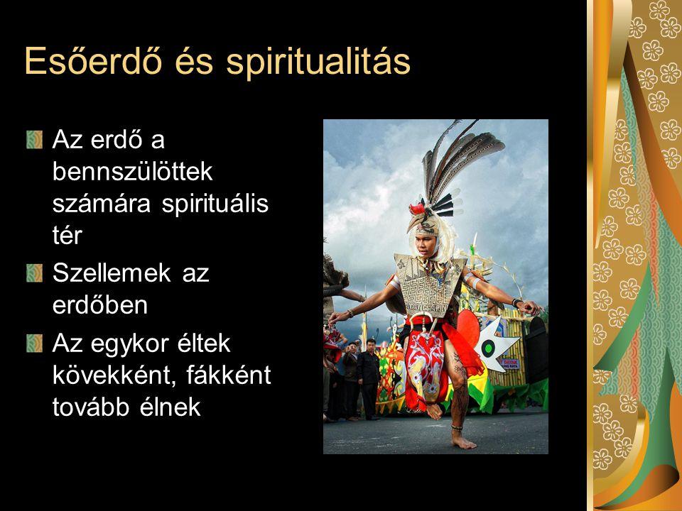Esőerdő és spiritualitás Az erdő a bennszülöttek számára spirituális tér Szellemek az erdőben Az egykor éltek kövekként, fákként tovább élnek