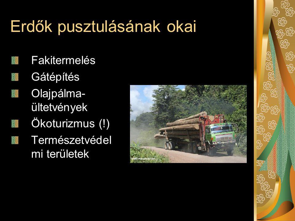Erdők pusztulásának okai Fakitermelés Gátépítés Olajpálma- ültetvények Ökoturizmus (!) Természetvédel mi területek